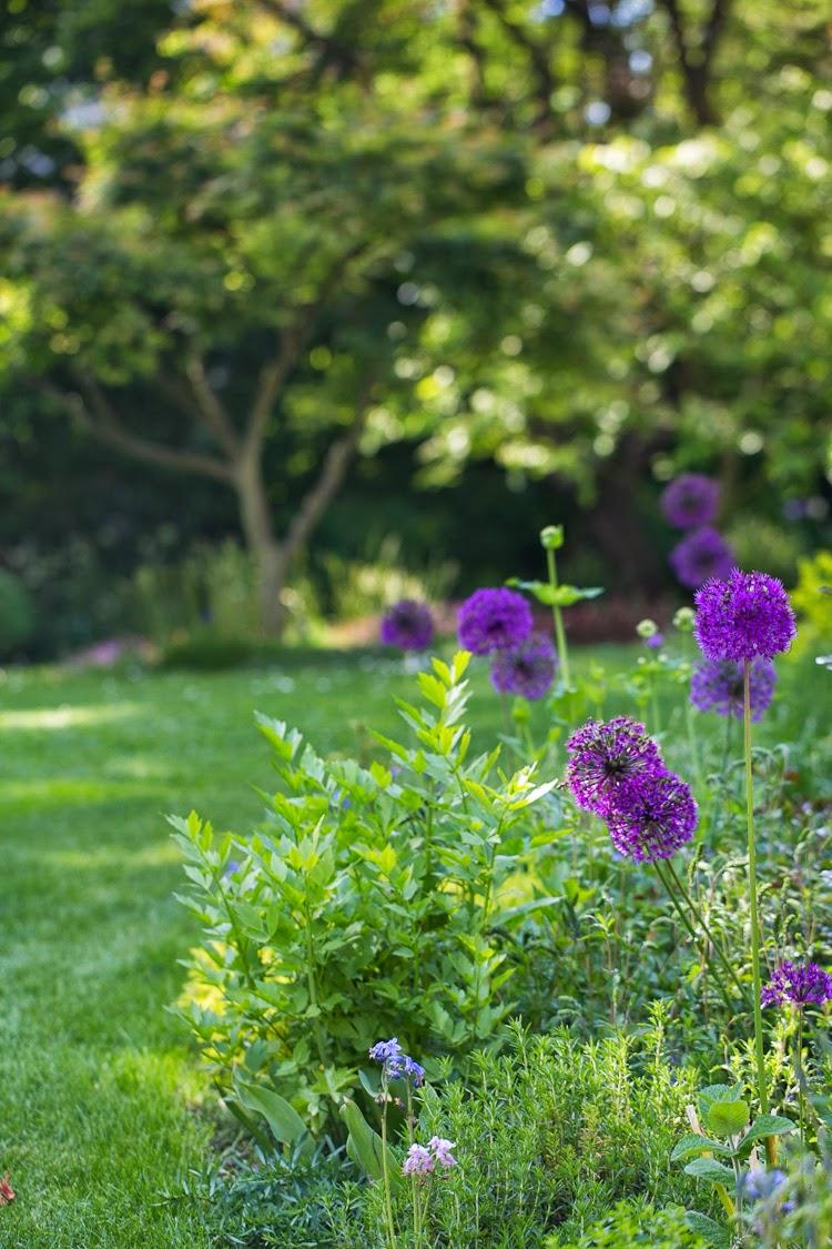 purplegarden2-1-von-1