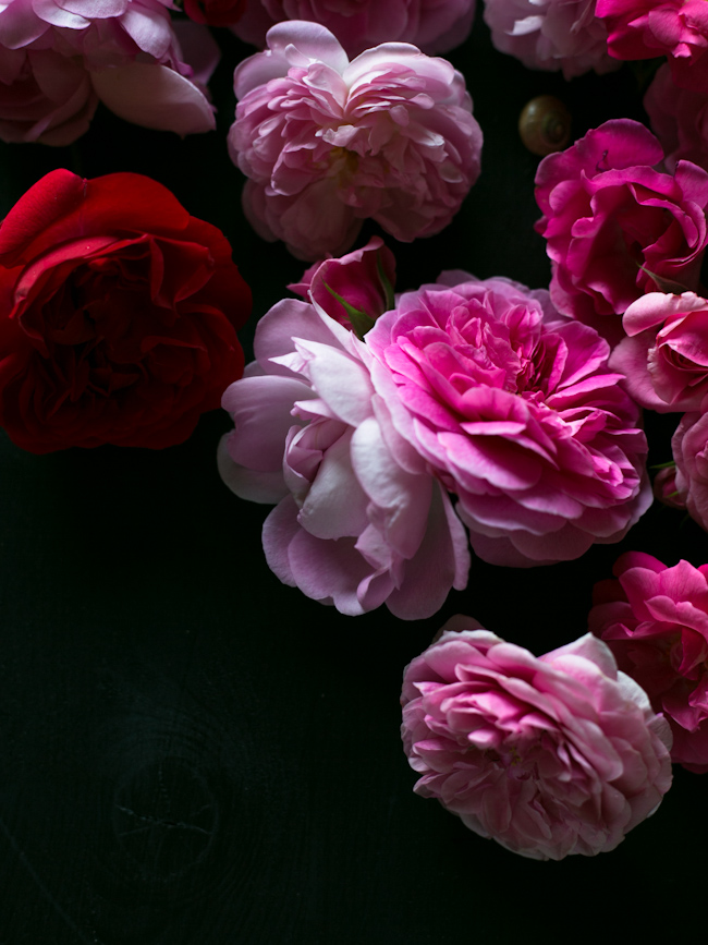 garden-rose-syrup