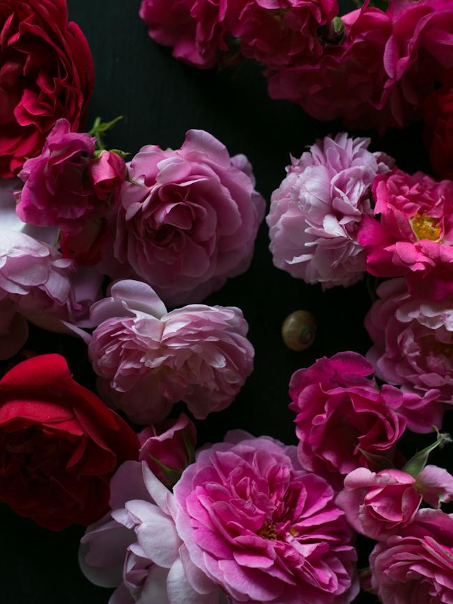 garden-rose-syrup4