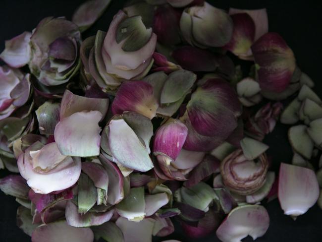 petals of artichokes